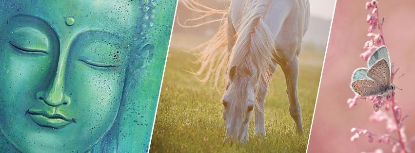 Boudha, cheval et papillon